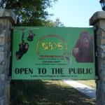 Palm Harbor FL Primate Sanctuary